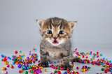 little surprised funny kitten with small metal jingle bells bead