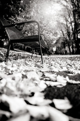 fall black and white