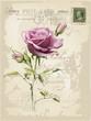 Obrazy na płótnie, fototapety, zdjęcia, fotoobrazy drukowane : Vintage card with rose