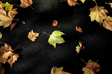 leaves from above