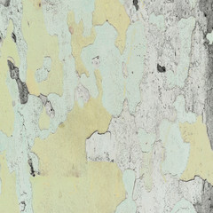 texture of sycamore bark