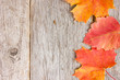 Autumnal  leaves and old wooden planks