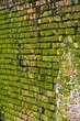 Muro con muschio