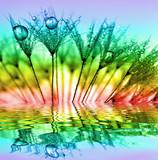 dewy dandelion - 57783747