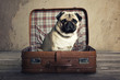 canvas print picture - Dog in a Case