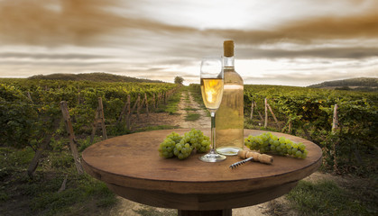 still life with white wine on vineyard background