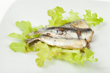 sardines on a white background