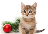 Kitten with red ball and twig of fir