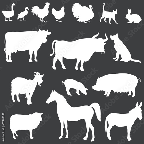 vector white silhouettes of farm animals