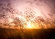 Summer Dry Grass - 57791519