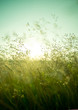 Leinwandbild Motiv Summer Dry Grass