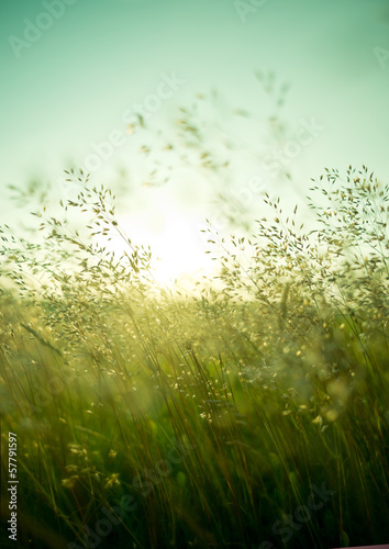 Summer Dry Grass - 57791597