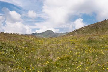 Blumenwiese in den Bergen