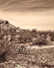 Central Arizona Desert