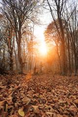 Deep forest autumn