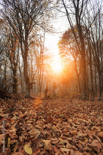 Deep forest autumn
