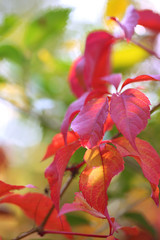 Red leaves on bright background