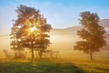 Lever de soleil poutres à travers l'arbre de brouillard