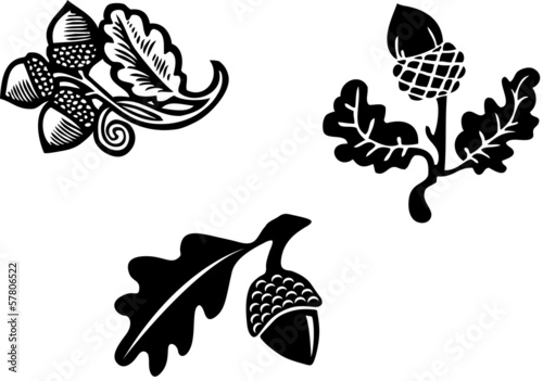Black & White Acorn graphic element