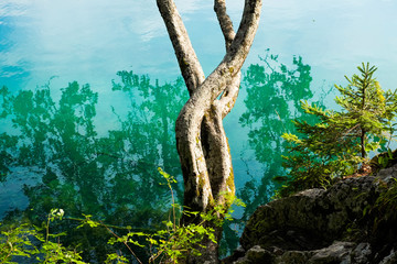 Tree trunk on mountain lake