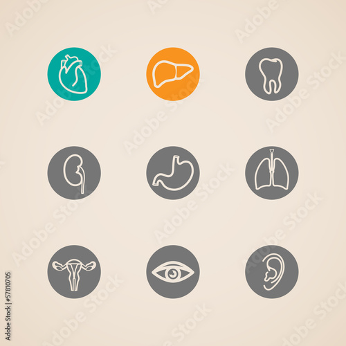 vector human organ icons set