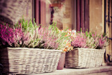 Fototapety Pink and purple heather in decorative flower pot