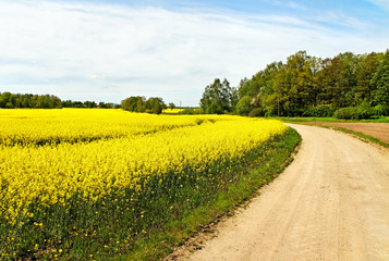 Landscape with canola field.