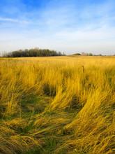 Krajobraz z łąki i pochmurne niebo