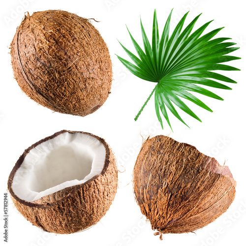 Coconuts with palm leaf on white background. Collection