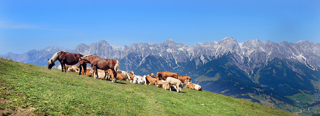 Sommer auf der Alm - summer on the mountain pasture
