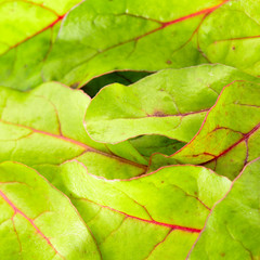 Fresh green chard salad background