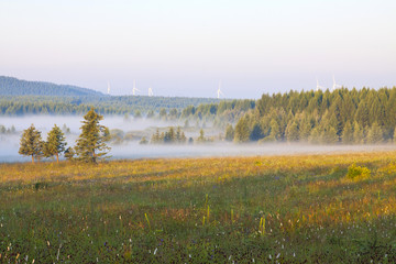 grassland and woods in fog in the morning