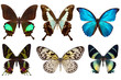 Many different beautiful butterflies