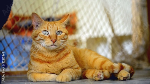Ginger cat in the animal shelter waiting for adoption