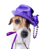 dog in the women's stylish violet hat