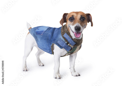little dog at  the fashion denim coats