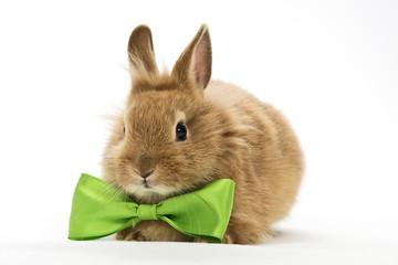 Kaninchen mit grüner Schleife