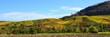 Leinwanddruck Bild - Weinreben und buntes, herbstliches Laub im Weinberg