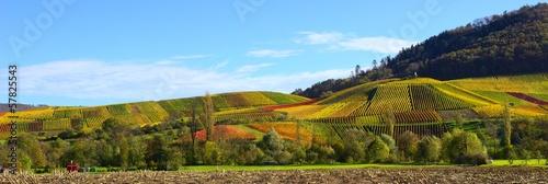 Leinwanddruck Bild Weinreben und buntes, herbstliches Laub im Weinberg