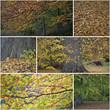 Collage Details aus dem herbstlichen Wald