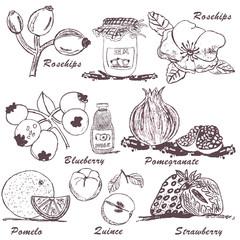 fruit sketch 4