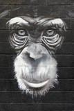 chimpanzé graffiti mono 0499f - 57829924