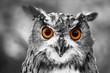 leuchtende Augen - Uhu