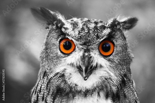 canvas print picture leuchtende Augen - Uhu