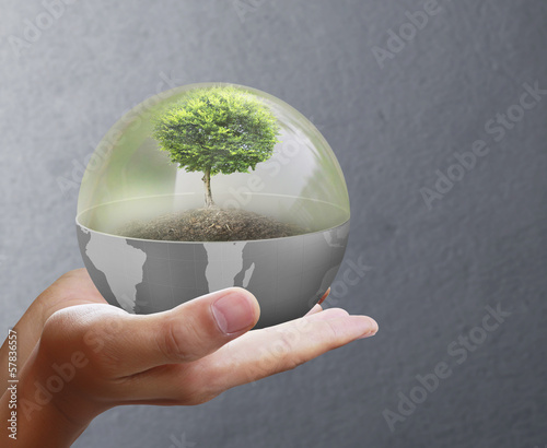 Small tree in  hand businessman