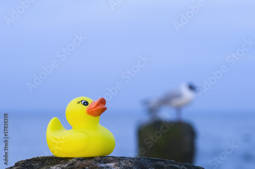 rubber duck and gull