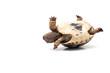 Leinwandbild Motiv Turtle