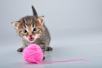 little kitten playing with a woolball