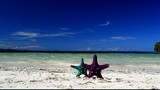 Two starfishes on tropical beach, footage