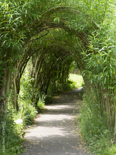 Walk through the willow avenue in Wycoller Lancashire